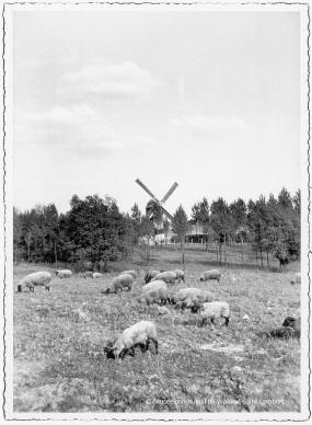 De windmolen in zijn vorige plaats in Sint-Lambrechts-Woluwe (circa 1965)